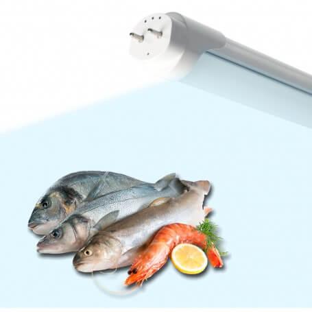 Tubo LED T8 per banchi Ittici 60cm 10W